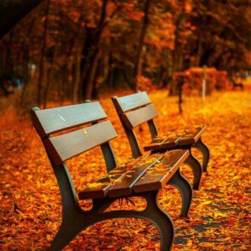 Solitude quotes picture