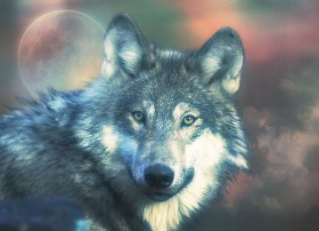 Wolf Spirit Animal test image