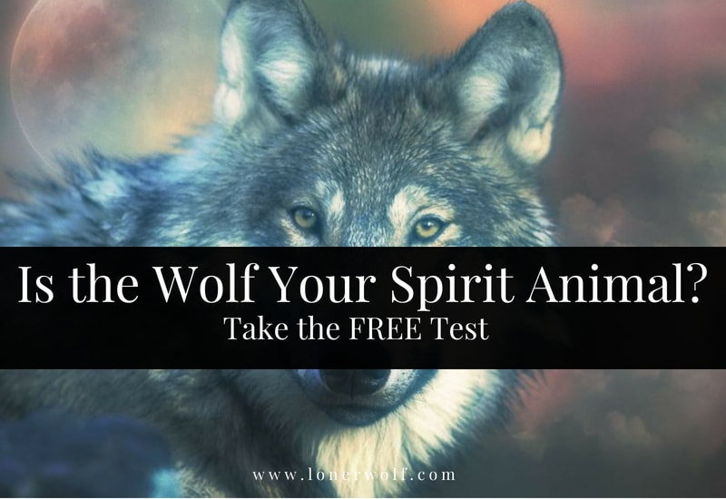 Wolf Spirit Animal Test Lonerwolf