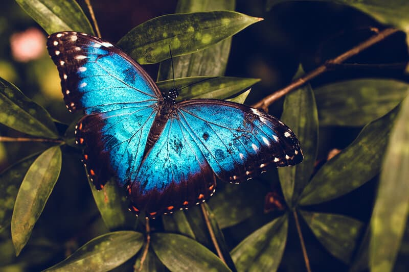 Image of a blue butterfly