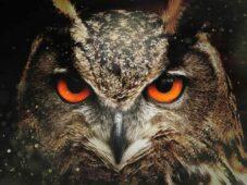 Image of an owl spirit animal