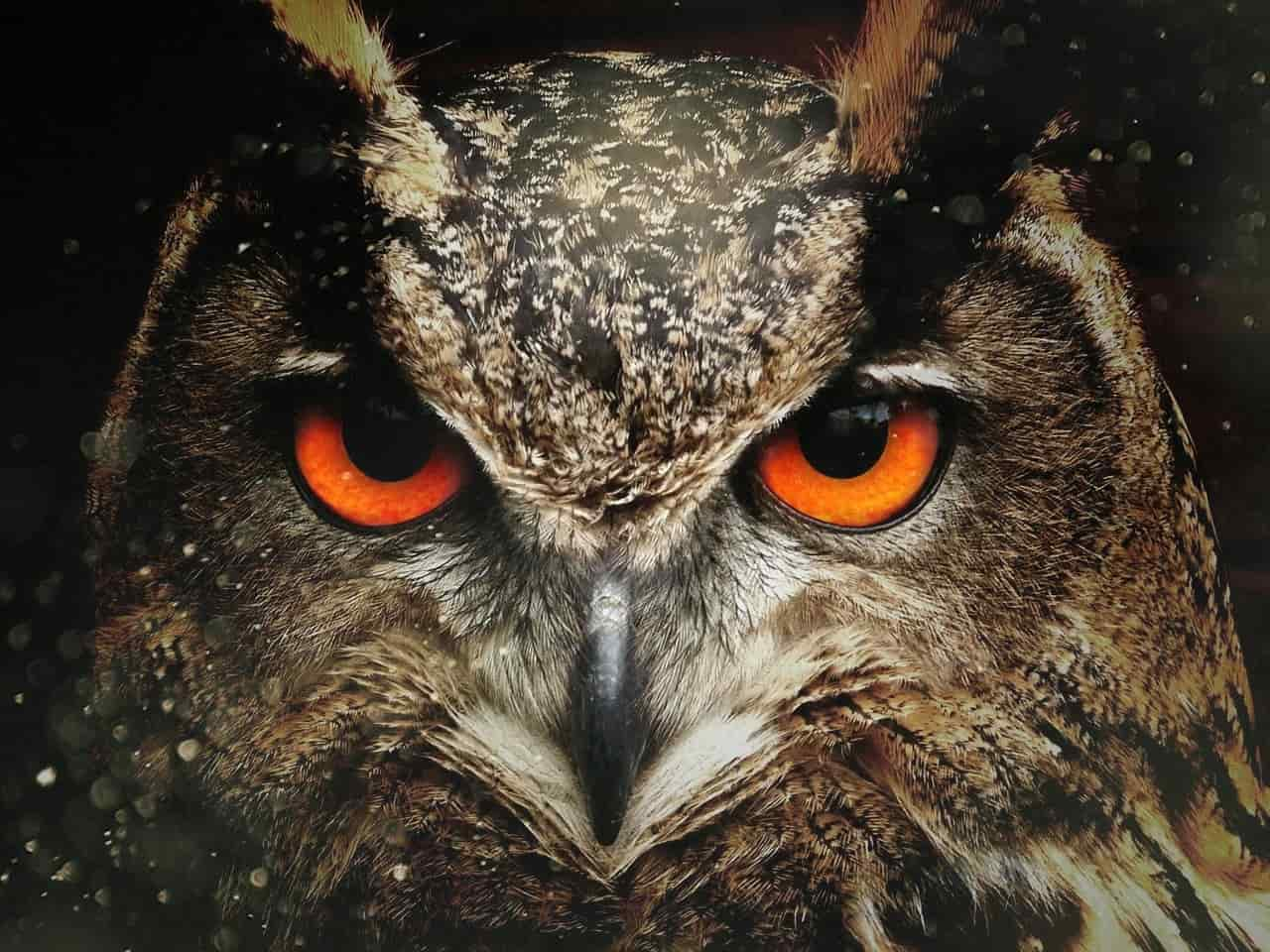 Image of an owl spirit animal