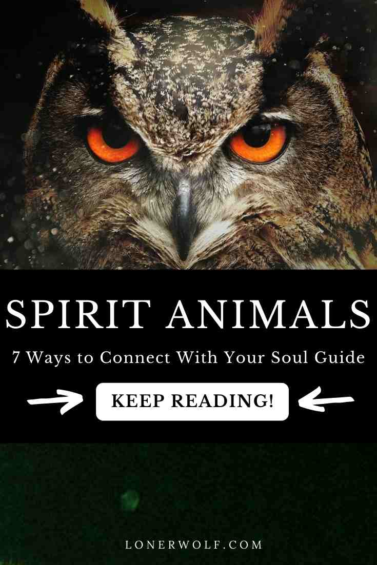 7 Ways to Connect With Your Spirit Animal