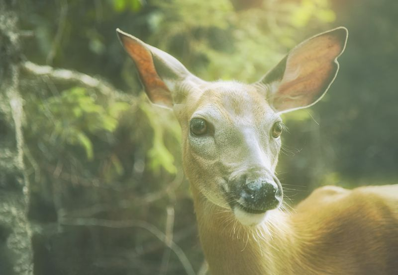 Image of a gentle deer