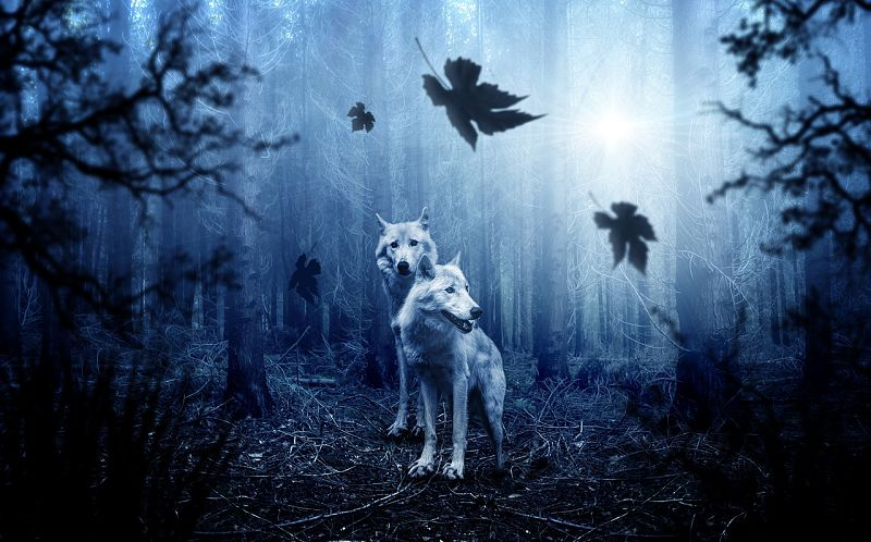 Wolf Spirit Animal Lonerwolf
