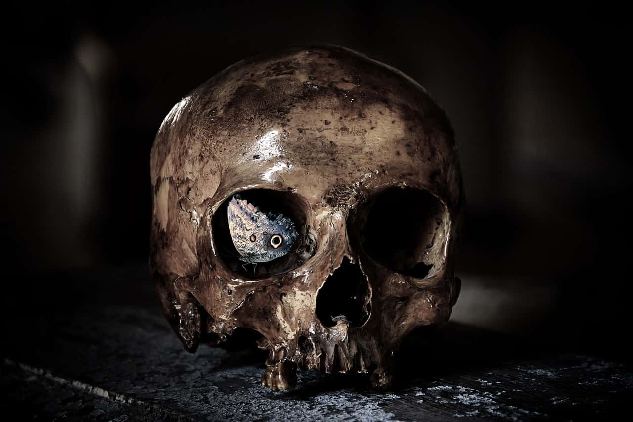 image of a skull representing the shadow self