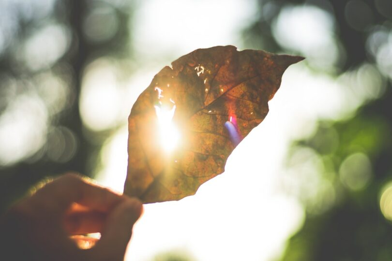 Image of a person holding up a leaf to the sunlight symbolic of spiritual evolution