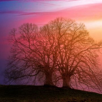 Image of two magical trees standing together symbolic of self-love