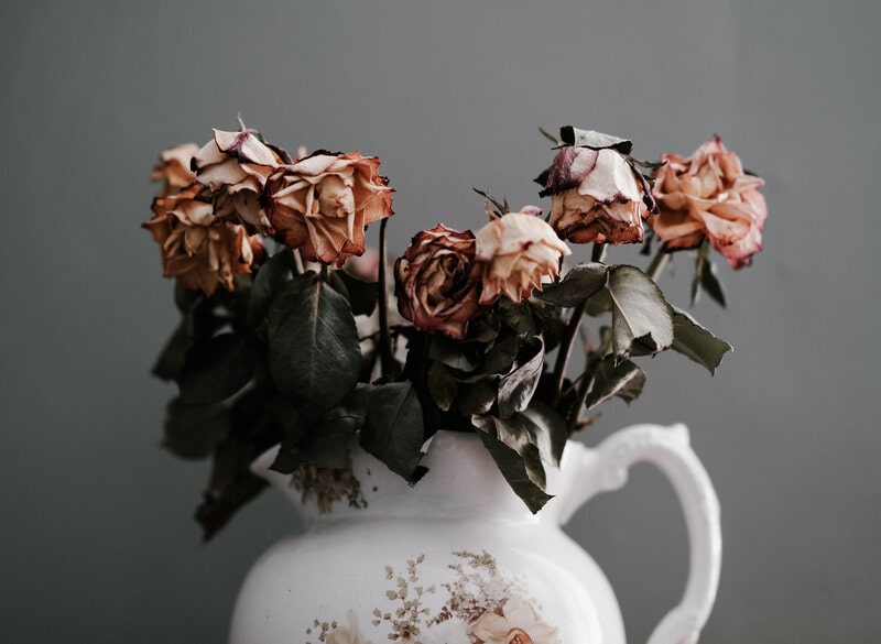 Image of wilting roses