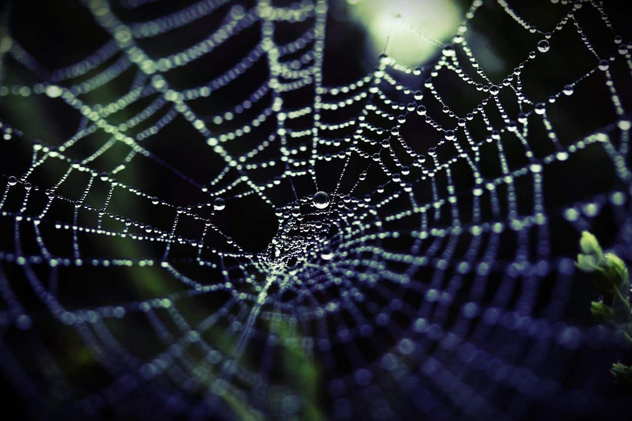 Image of a spider's web that represents core beliefs