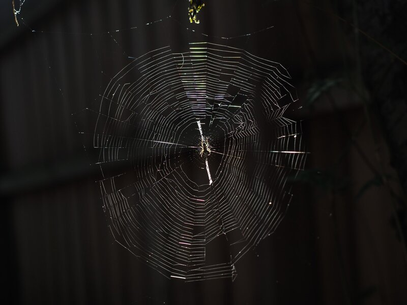 Image of a spider's web symbolic of core beliefs