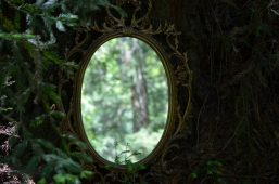 Image of a mirror in the forest symbolizing projection