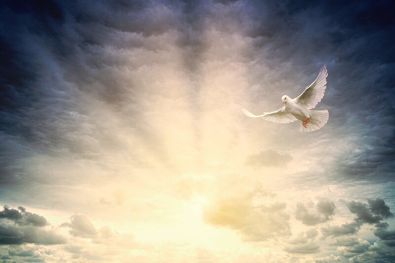 Image of a dove symbolic of the lightworker