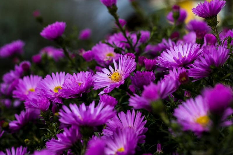 Image of soothing purple flowers for when life sucks