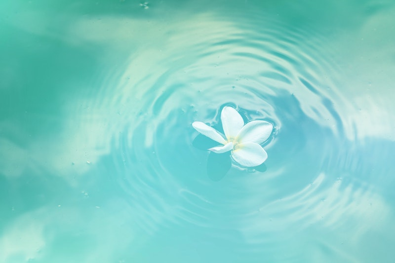 Image of a flower on blue water