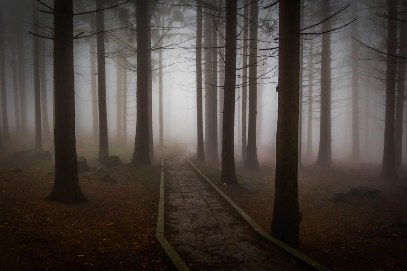 Image of a dark forest that represents the spiritual journey