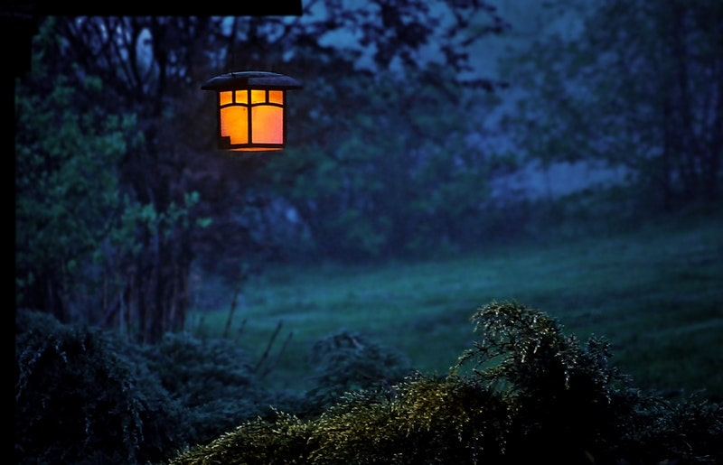 Image of a mysterious lantern in a forest