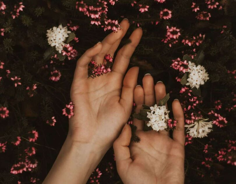Image of two hands on a bed of flowers in an act of ayni