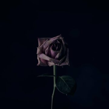 Image of a sad and unhappy flower dying alone