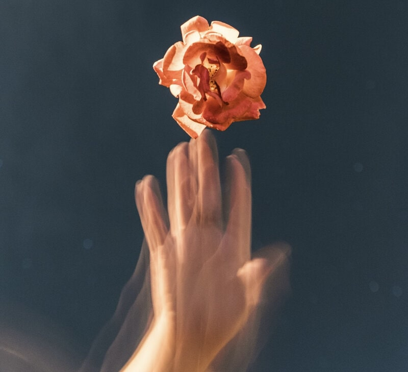 Image of a person touching a pink rose and absorbing its energy