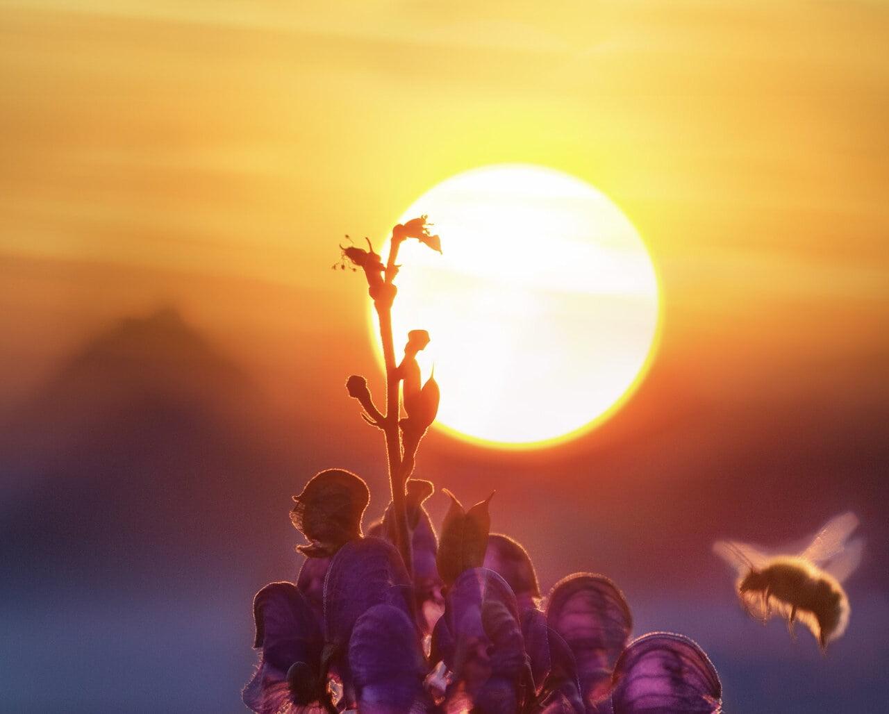Image of a bright sun symbolic of ego death