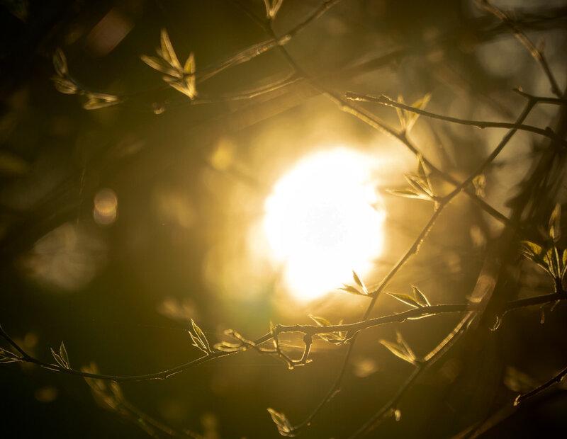 Image of sunlight shining through the tree canopy