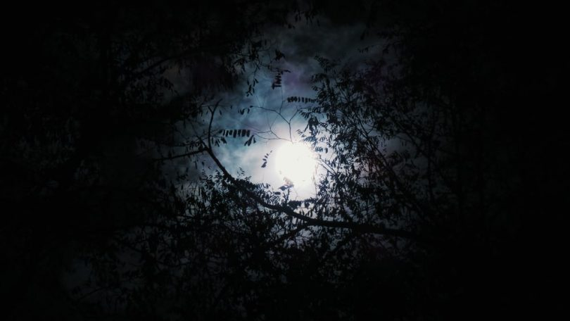 Image of a black forest symbolic of the dark night of the soul