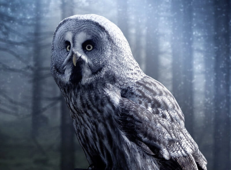 Image of an owl that symbolizes spiritual guidance