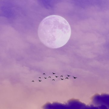 Image of a moon in a purple sky