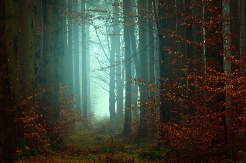 Image of a misty forest