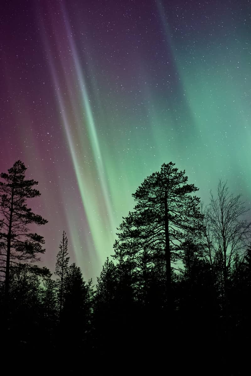 Image of a sacred wild forest and aurora borealis