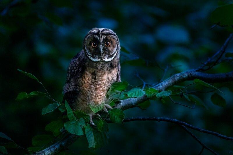 Image of an owl representing spiritual discernment