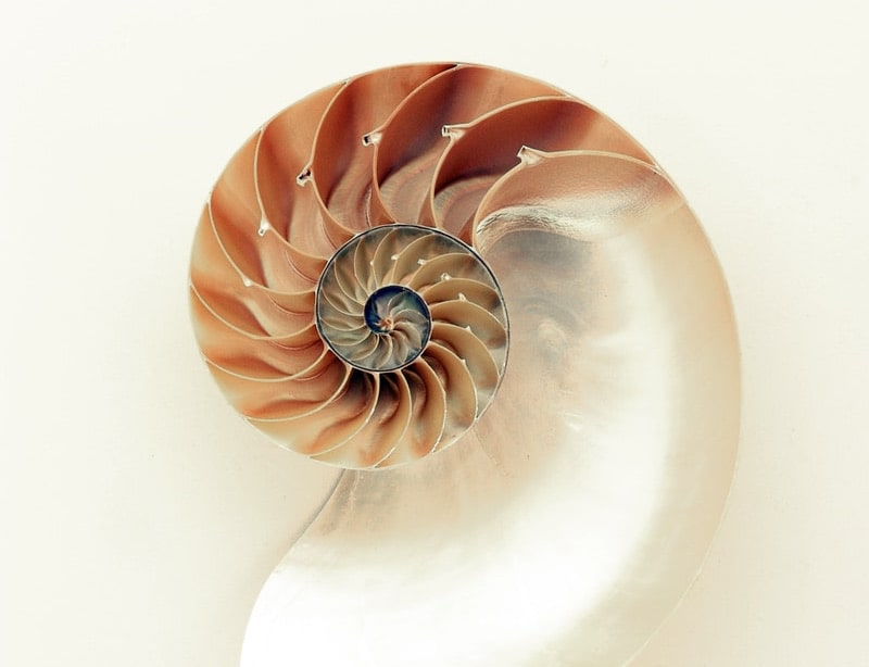 Image of a shell representing authenticity and honesty