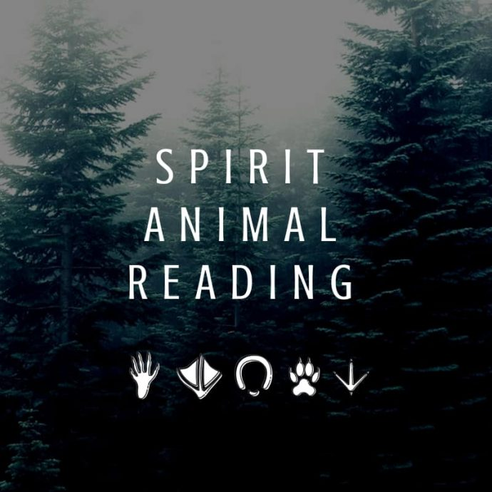 Spirit animal reading image