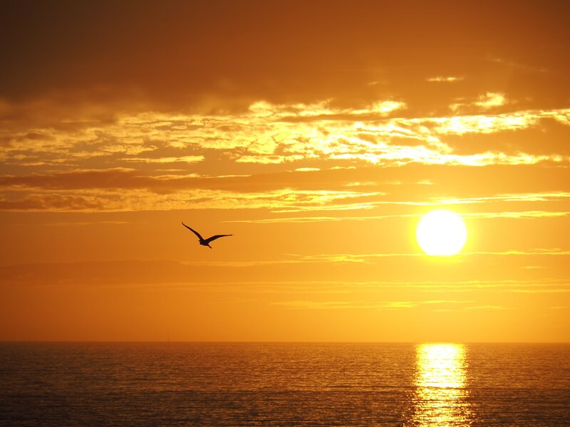 Image of a free spirit bird flying into the sunset