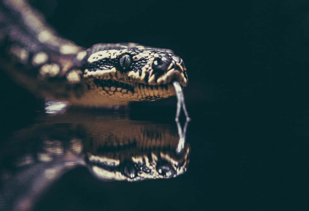 Image of a snake