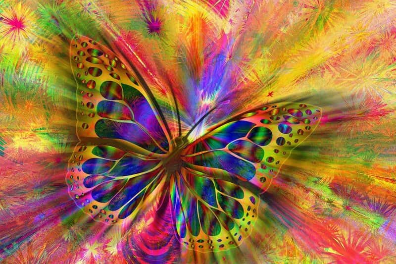 Image of a butterfly that represents synchronicity