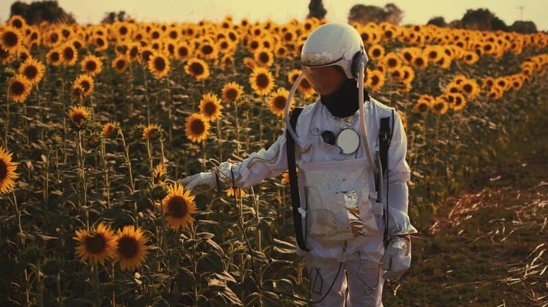 Image of an astronaut in a field of sunflowers