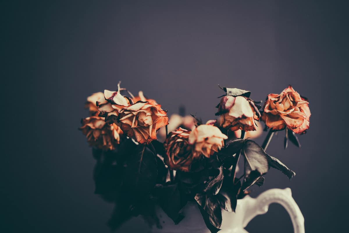 Image of dead roses symbolic of toxic relationships