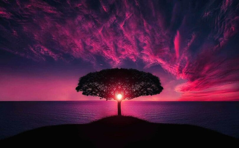 Image of a tree and sun symbolic of self-realization