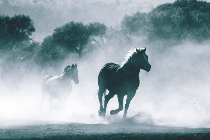Image of wild horses running freely symbolizing non-attachment