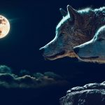 Two wolves story image