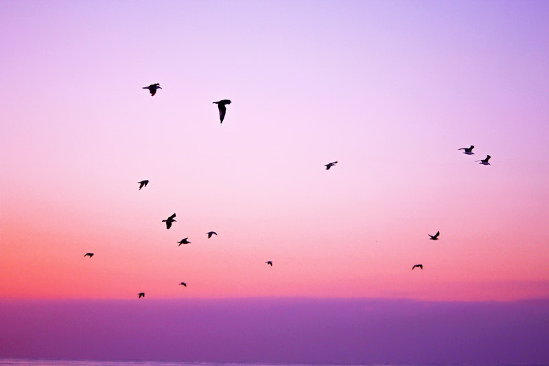 Image of a pink sky with birds that symbolizes inner peace