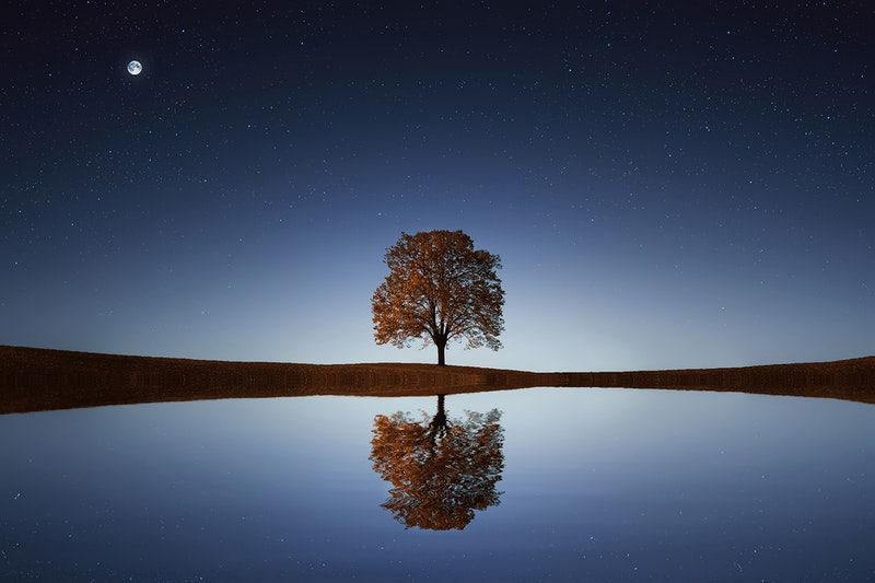 Image of a mystical tree symbolic of the spiritual journey