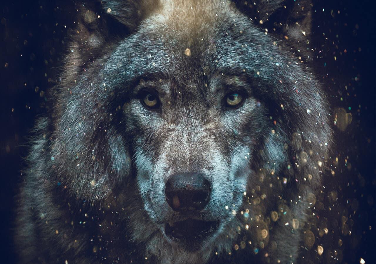 spirit animal quiz image