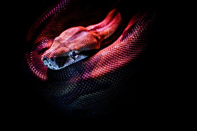Image of a snake that symbolizes the kundalini awakening