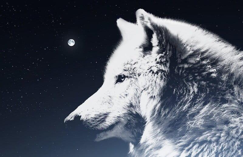 Image of a wolf bodhisattva