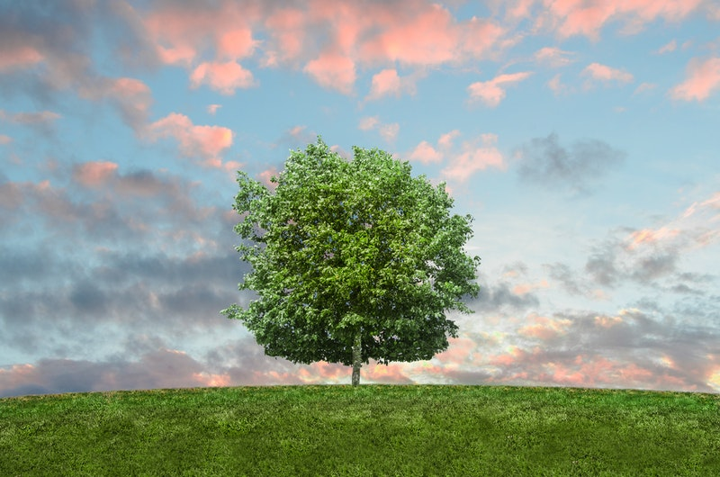 Image of a beautiful tree for healing meditation