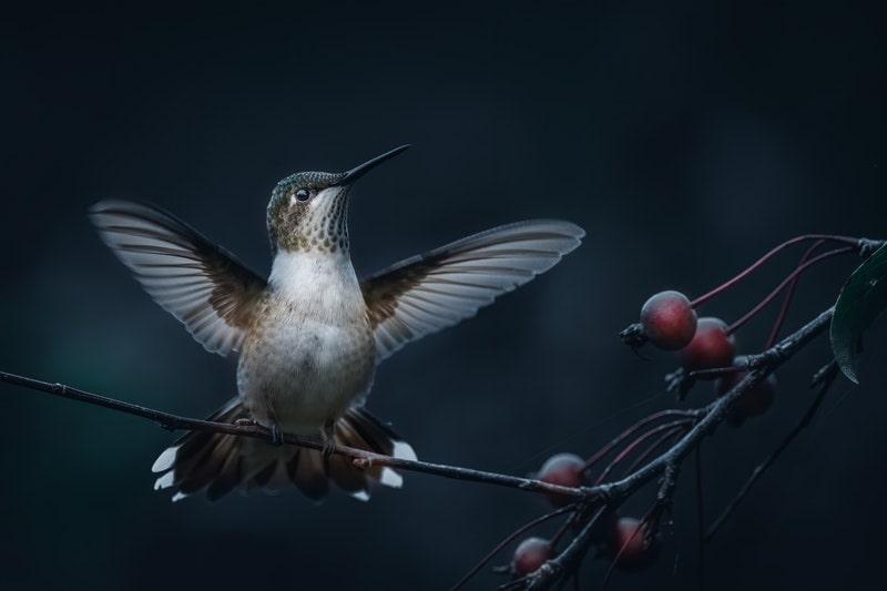 Image of a hummingbird in flight symbolic of deep listening