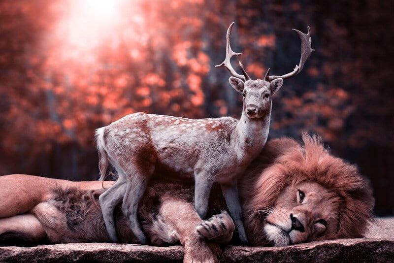 Image of a deer and lion lying together symbolic of karmic relationship
